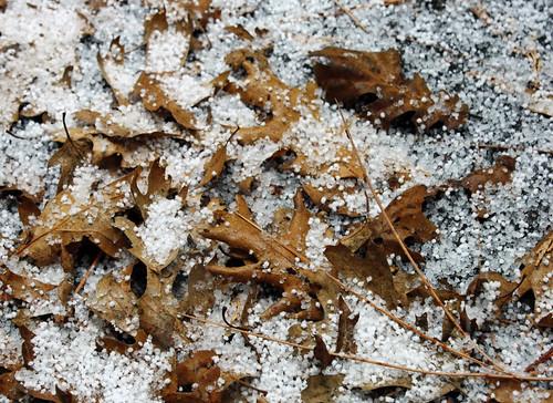 ice.leafpile