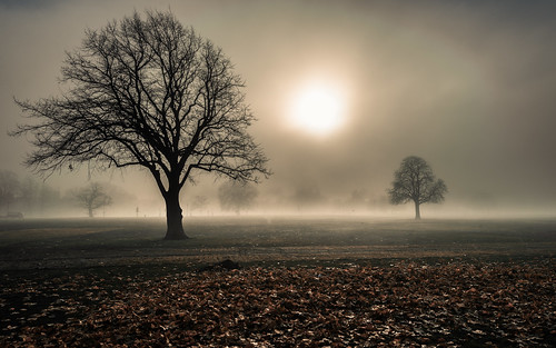 park uk trees england sun mist london fog nebel unitedkingdom clapham claphamcommon baum lambeth
