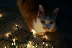 Casper and tree lights