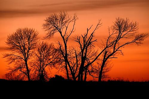 trees color sunrise nikon dunes predawn sanddunes d600 devilducmike
