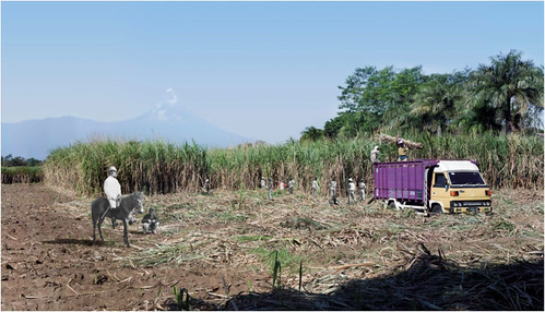 AbednegoTrianto - Sugar Cane Harvesting at the Base of Mount Semeru ( 2013)