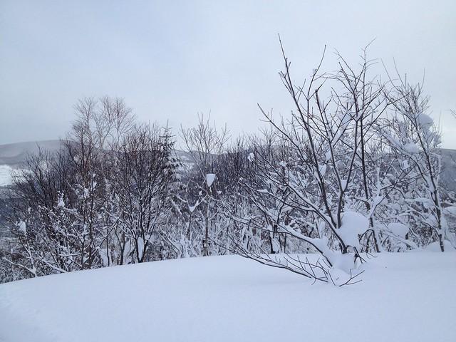 Photo:朝里川温泉スキー場 パープルリフト頂上-01 20140103 By y_ogagaga