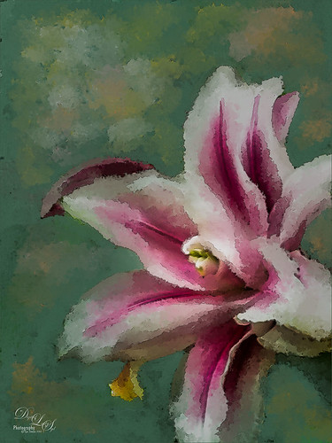 Image of a pink and white flower painted using Photoshop