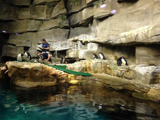 at Shedd Aquarium