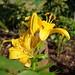 Blume mit Viech