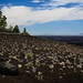 Wild Flowers at Craters of the Moon by Robert Gifford