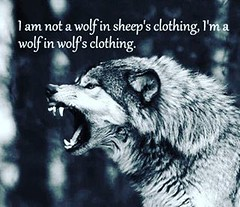 I find it slightly amusing when people forget what kind of wolf you are/can be and act surprised when they get bit.