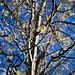Photos - Belief Trees