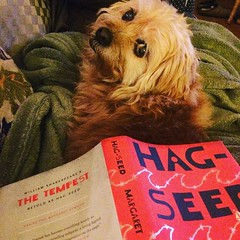 I do not have time to read this tonight. I'm so going to read this tonight. #margaretatwood, #hagseed, #dogsofinsta, #phdlife