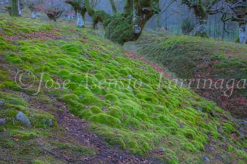 Parque Natural de Gorbeia #DePaseoConLarri #Flickr -2841