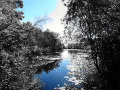 Mill Pond Park -- Autumn (29)