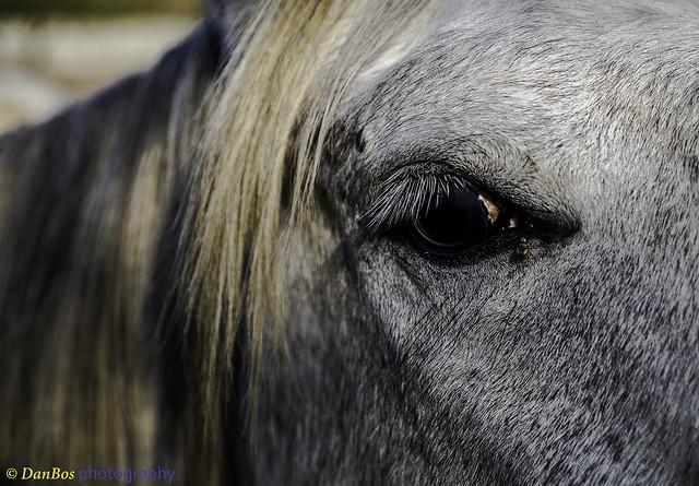 Horse's eye details