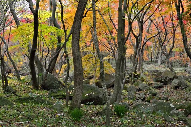 Munsusa forest