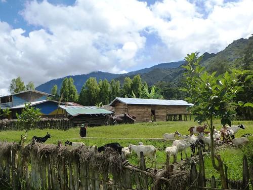Papua13-Wamena Nord-Wosilimo (65)