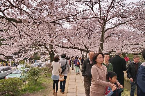 【写真】2013 桜 : 哲学の道/2018-12-24/IMGP9253