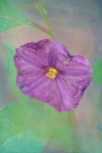 Artsy Purple Potato Flower by conniee4 aka Connie Etter
