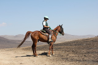 Try Horse Riding at Delta Rain (activity) - Things to do in Maun