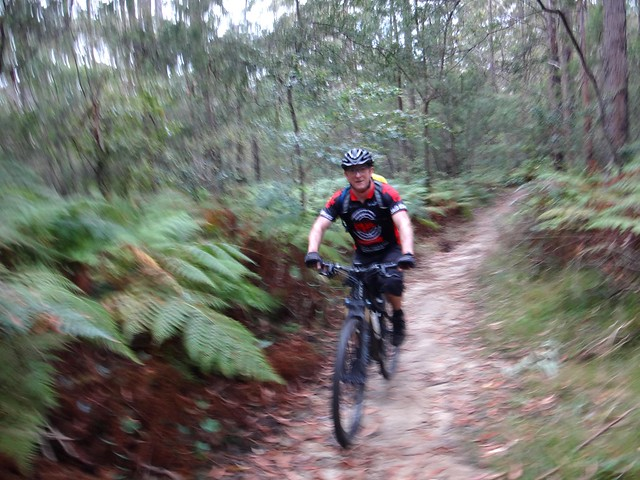 Single Track, Mt Mee