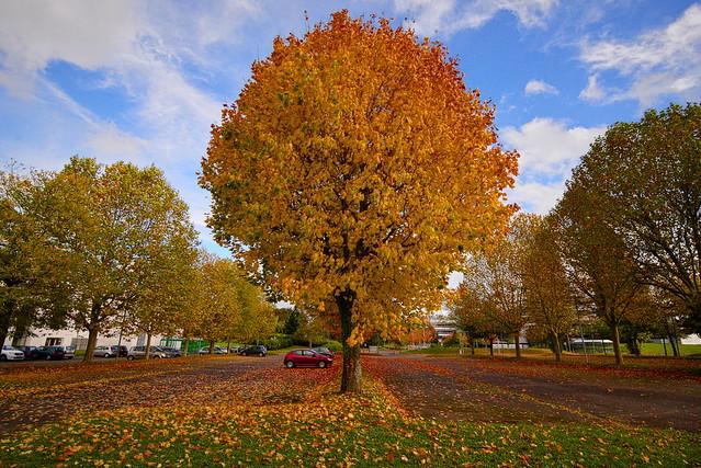 Herbst - Gif sur Yvette