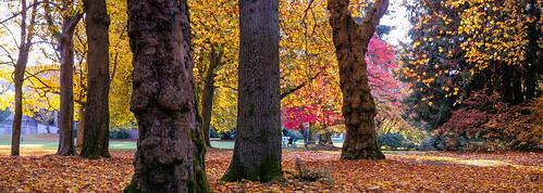 Volunteer Park, Seattle, USA