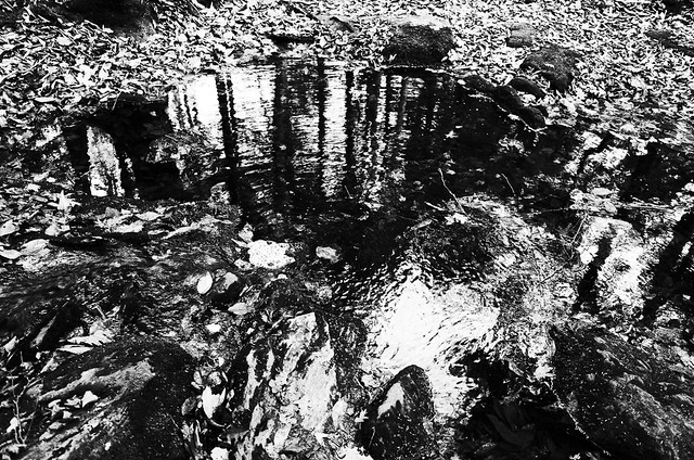 Race Brook pool and reflection