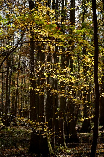 nikon northcarolina foliage d300 afmicronikkor60mmf28d merchantsmillpond travelswithrobin