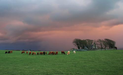 sky church canon skies cattle kitlens stormy snowdonia caernarfon llanfaglan llanfaglanchurch