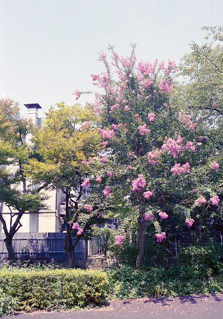 府中郷土の森公園 花 Fuchu-si, Tokyo