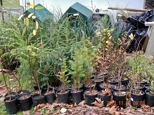 2013 Plant Order