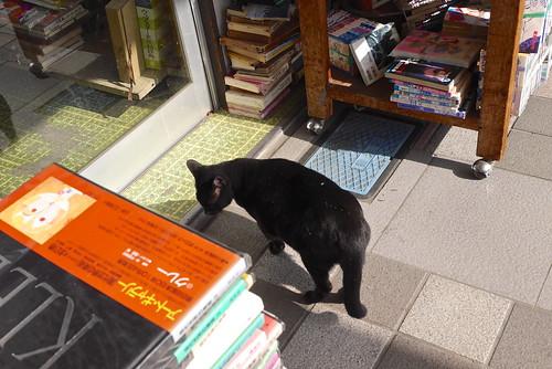 古本屋の店番猫@宇和島