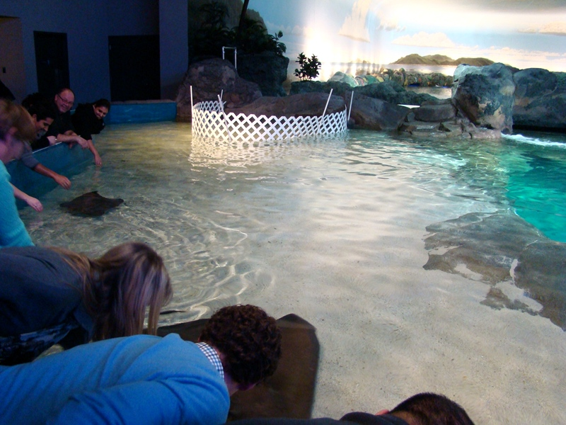 Ripley's Aquarium touching stingrays