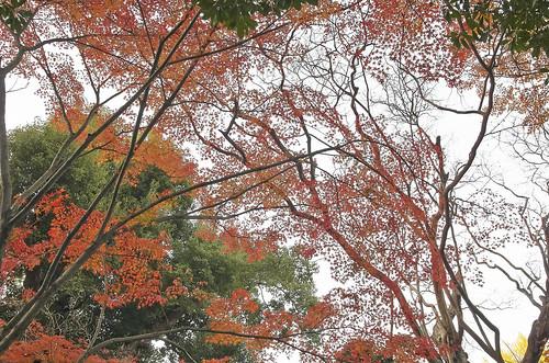 【写真】2013 紅葉 : 白沙村荘/2020-12-28/IMGP3707