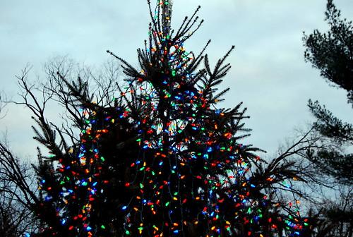 lit tree-001