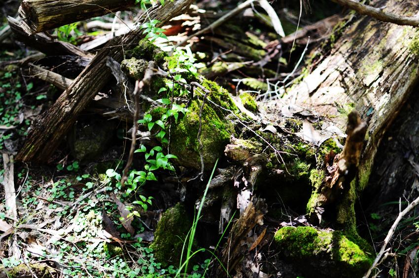 green-bush c
