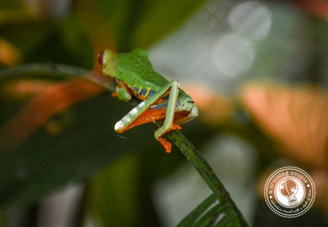 Frog Jaguar Rescue Center
