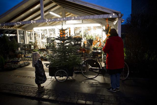 Heidis Christmas Tree_1