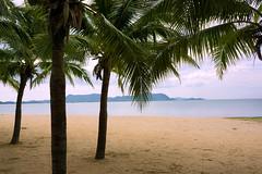 Under palms