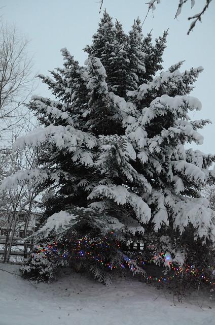 2013-12-15-Winter-270