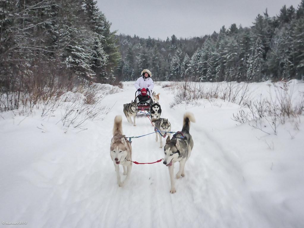 Dogsledding Ontario Canada