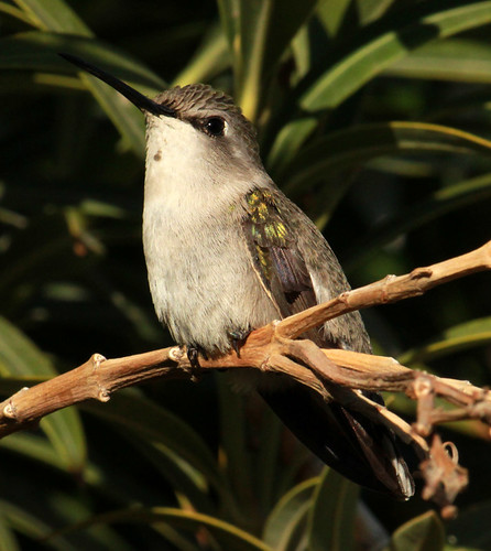 143103-1.jpg by Robert W Gilcrease