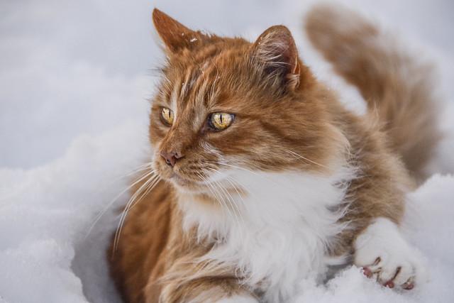 Adventurer in The Snow
