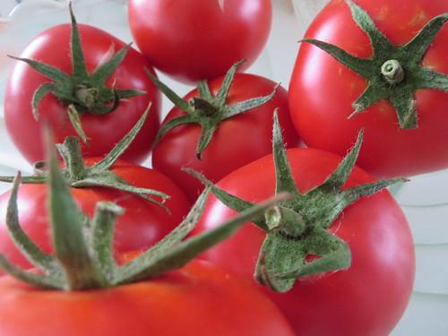 Fresh tomatoes 24/365