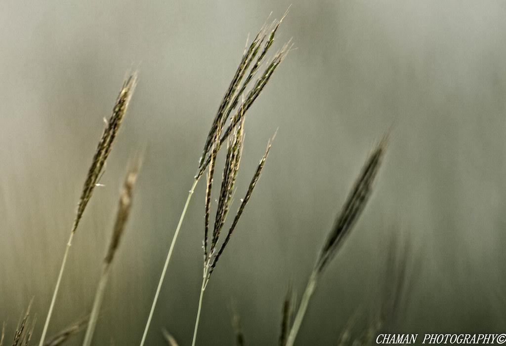 IMAGE: http://farm6.staticflickr.com/5523/12178997675_0cb35696dd_b.jpg