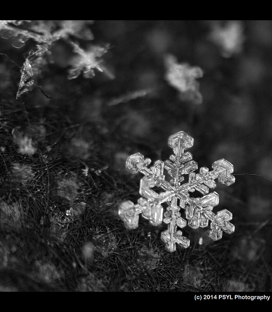February Snowflake 1