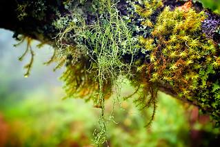 Moss on tree branch