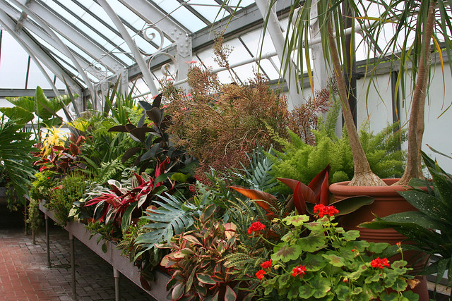 40_greenhouse_plants