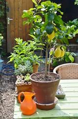 lammie's garden