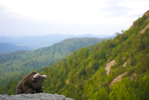 Buddy Bison at Shenandoah NP