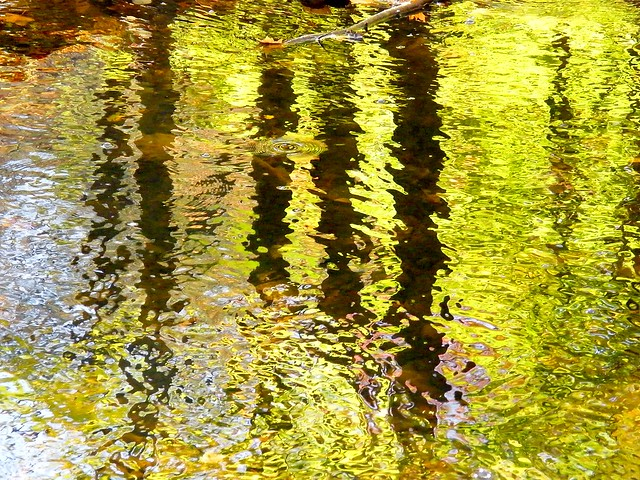Yellow Abstract Tree Reflection