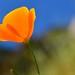 Hoy es un hermoso día / Today is a beautiful day by Carolita✿